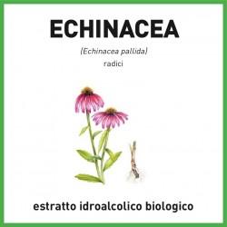 Estratto idroalcolico biologico di Echinacea pallida