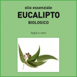 Olio essenziale di Eucalipto, foglie e rami