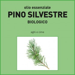 Olio essenziale di Pino silvestre, aghi e cime